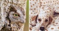 23 снимки на животни, в които ще трябва да се вгледате още веднъж, за да ги откриете