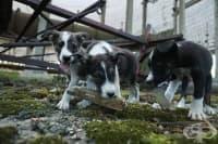 """Животните в Забранената зона около АЕЦ """"Чернобил"""""""