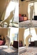 10 котки, които обичат слънцето повече от всичко