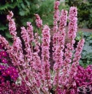 20 отровни растения, които най-добре да не се държат у дома