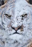 15 снимки на животни, които могат да ви изплашат само с поглед