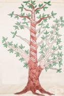 Дърво на Аквалумните, представящо развитието на следдипломните програми по анестезиология в САЩ