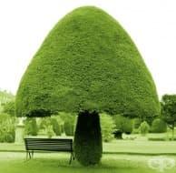 13 поразително красиви дървета, които сякаш са дошли от друго измерение