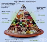 Хранителна пирамида или схематично изображение на принципите на здравословното хранене