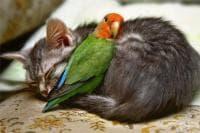 В очакване на зимата, домашните животни търсят топлина