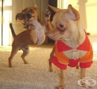 Най-смешните кучешки фотобомби в една галерия