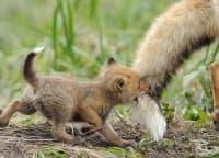 20 сладки животни, които знаят, че винаги могат да разчитат на мама