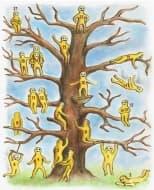 Посочете къде бихте застанали на дървото и разберете какво означава това за вас