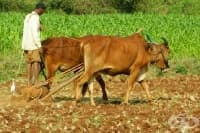 """Как земеделието помага на хората да произнесат за пръв път звуците """"В"""" и """"Ф"""""""