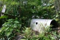 Момичето, оцеляло 11 дни в джунглата след самолетна катастрофа