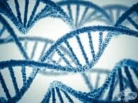 ДНК и медицинските достижения в полза на съдебните разследвания