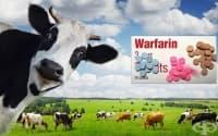 Мухлясало сено и няколко мъртви крави: как е открит антикоагулантът варфин