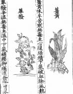 Още писмени сведения, свързани с лечебната сила на куркумата от средата на 20-ти век