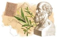 Растителни заместители на аспирина в древния свят