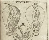 Ролята на изображенията, илюстриращи развитието на плода в утробата, в акушерските книги от 16-ти век
