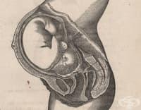 Схващанията на Джон Бракстън Хикс за контракциите по време на бременността от 1871 година