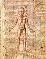 Странни средновековни лекарства, които днес смразяват усмивката ни