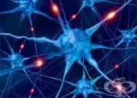 Как да храним нервите
