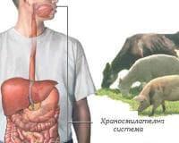 Хранене при бруцелоза