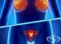 Как да храним женската полова система