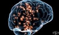 Ученето на втори език подобрява функцията на мозъка и забавя когнитивната дегенерация