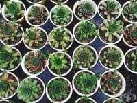 18 стайни растения за начинаещи градинари - Част 3