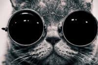 Актуалните слънчеви очила за 2013 година