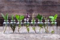 Как да отглеждате билки във вода у дома си