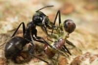6 ужасяващи насекоми, на които не им пука за правилата на Майката природа – I част