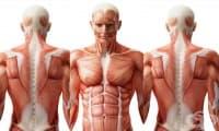 99 любопитни факта за човешкото тяло – I част