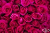 Цветовете на розата и посланията, които носят