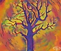 Мъдростта на дърветата: нашите тихи приятели ни учат как да бъдем себе си, вместо да се преструваме