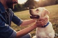 Домашният любимец подобрява здравето и живота ви