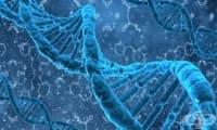10 мита за гените – разбити