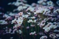 Изберете най-подходящите цветя за вашата градина