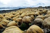 Тайни снимки разкриват къде расте косата на Доналд Тръмп