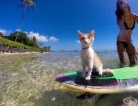 Запознайте се с едноокия котарак, който обича да плува и сърфира в Хавай (галерия)