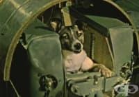 Навършиха се 60 години от изпращането на кучето Лайка в космоса