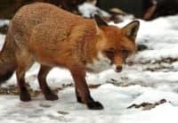 Странни факти за животните, които ще ви натъжат - част 3