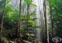 10 мита за оцеляване в дивата природа, които могат да ви убият – I част