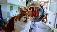 Запознайте се с Рубъл – най-старата котка, която навърши 30 години