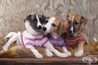 Нуждаят ли се кучетата от яке през зимата. Митове и факти
