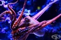 Учените твърдят, че ДНК на октопода не принадлежи на нашия свят!