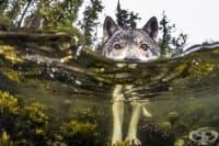Тези морски вълци  плуват  с часове