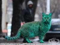Вижте мистериозната синьозелена котка от Варна (Снимки + видео)
