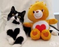 Запознайте се със Зоуи, котето с голямо сърце