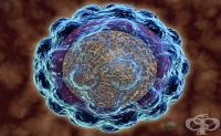 Хепатитен G вирус
