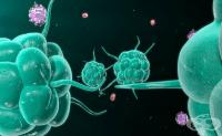 Имунопрофилактика и имунотерапия