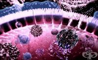 Роля на Главния комплекс на тъканна съвместимост в имунния отговор