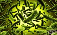 Анаеробни Грам-положителни бактерии